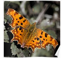 Comma Poster