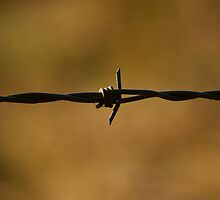 Barbed by Andy Beattie