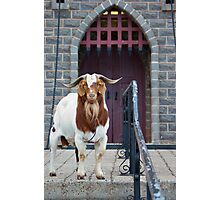 Big Billy Goat Gruff Photographic Print
