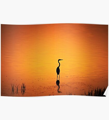 BIRD SILHOUETTE IN SUNSET Poster