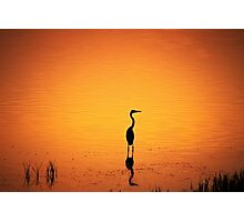 BIRD SILHOUETTE IN SUNSET Photographic Print