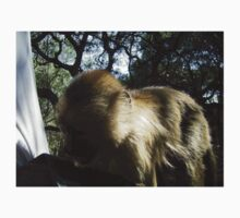 Capuchin Monkey 4, Gauteng, South Africa One Piece - Short Sleeve
