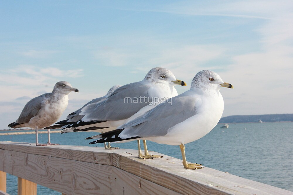 seagulls on the jetty by mattypaq