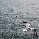 lonely bird by mattypaq