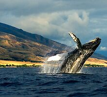 High Flying - A humpback whale breaches! by RobDeCamp
