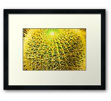 Psychedelic Golden Ball Barrel Cactus Spikes Close-up Framed Print