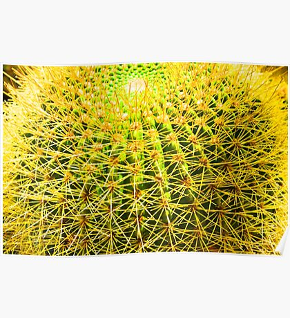 Psychedelic Golden Ball Barrel Cactus Spikes Close-up Poster
