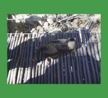 Capuchin Monkey 5, Gauteng, South Africa Baby Tee