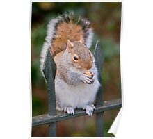 Squirrel of Hyde Park Poster