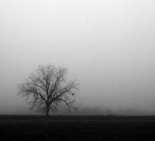 Solitude by nicolet