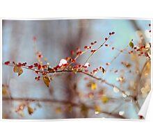 frozen winter berries Poster