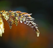 Winter Fern by Karen Martin