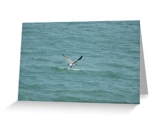 A flying seagull Greeting Card