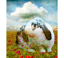 STRAWBUNNY FIELDS FOREVER Photographic Print