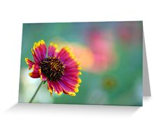 California Blanket Flower Greeting Card