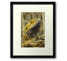 Australian Inland Bearded Dragon Reptile Framed Print