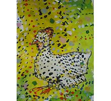 Little White Hen Photographic Print