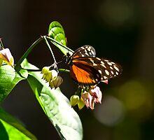 Detroit butterfly by Scott Ferguson