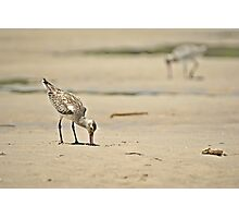 Sand piper on the beach  Photographic Print