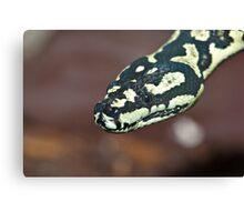 Yellow & Black Carpet Python - Morelia Spilota Cheynei Canvas Print