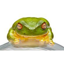 Green Tree Frog - Litoria Caerula - On Glass Photographic Print