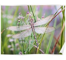 Newly emerged dragonfly #2 Poster