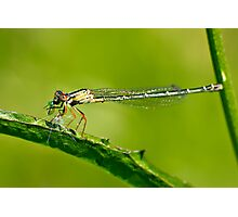 dragonfly on a leaf eating a grub Photographic Print