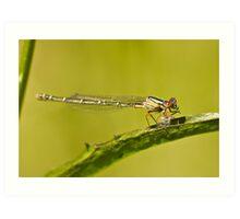 A dragonfly on a leaf eating a grub Art Print