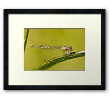 A dragonfly on a leaf eating a grub Framed Print