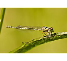 A dragonfly on a leaf eating a grub Photographic Print