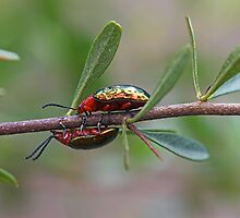 The Race of Two Beetles by clearviewstock