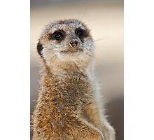Meerkat on lookout duty... Photographic Print