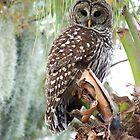 Barred Owl by Eaglelady