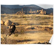 Red-tailed Hawk ~ Texas Canyon, AZ viewing Poster