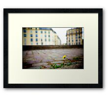 Parisian flower Framed Print