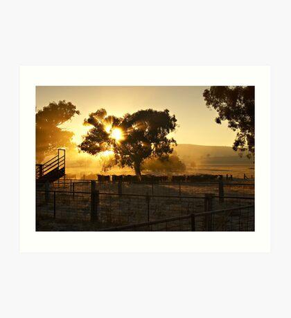 Cattle Sunrise 4 - Parkes, NSW Art Print