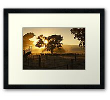 Cattle Sunrise 4 - Parkes, NSW Framed Print