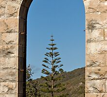 Lone Pine, Trial Bay Goal, NSW by clearviewstock