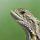 Eastern Water Dragon headshot by clearviewstock