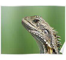 Eastern Water Dragon headshot Poster
