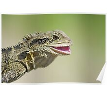 Smile! Eastern Water Dragon Poster