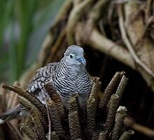 Peaceful Dove by clearviewstock