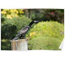 Cormorant on a wharf pylon. Poster