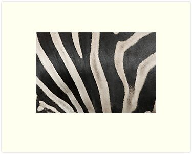 Zebra Print 2 by clearviewstock