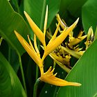 Heliconia Flowers by clearviewstock