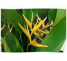 Heliconia Flowers Poster