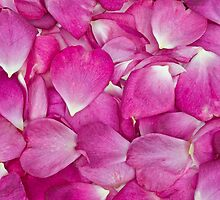 Heart Petals by clearviewstock