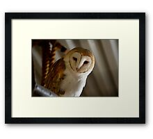Wild Barn Owl Watching From its Perch Inside a Rustic Barn Building Framed Print