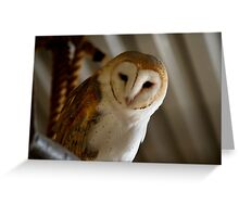 Wild Barn Owl Watching From its Perch Inside a Rustic Barn Building Greeting Card