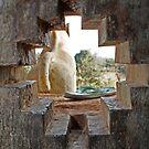 Tower Window with Odd View, Chittorgarh, Rajasthan, India by RIYAZ POCKETWALA